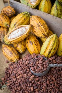 Cacao butter: Superfood